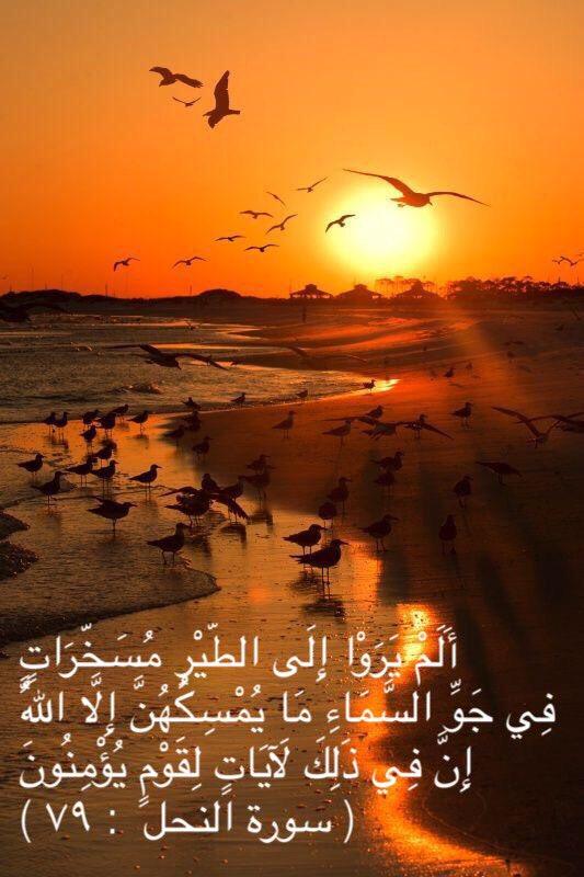 أنا ت راب Na Twitteru التفكر عبادة الله نور السماوات والأرض مثل