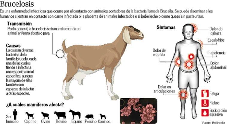 Cienciaenlascosas Na Twitteru Campana Contra La Brucelosis Brucella Es Una Bacteria Que Se Transmite A Los Humanos A Traves De Animales Infectados