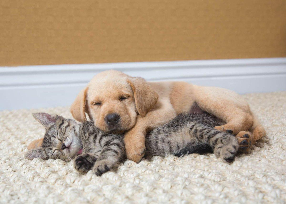 Спящие щеночки картинки