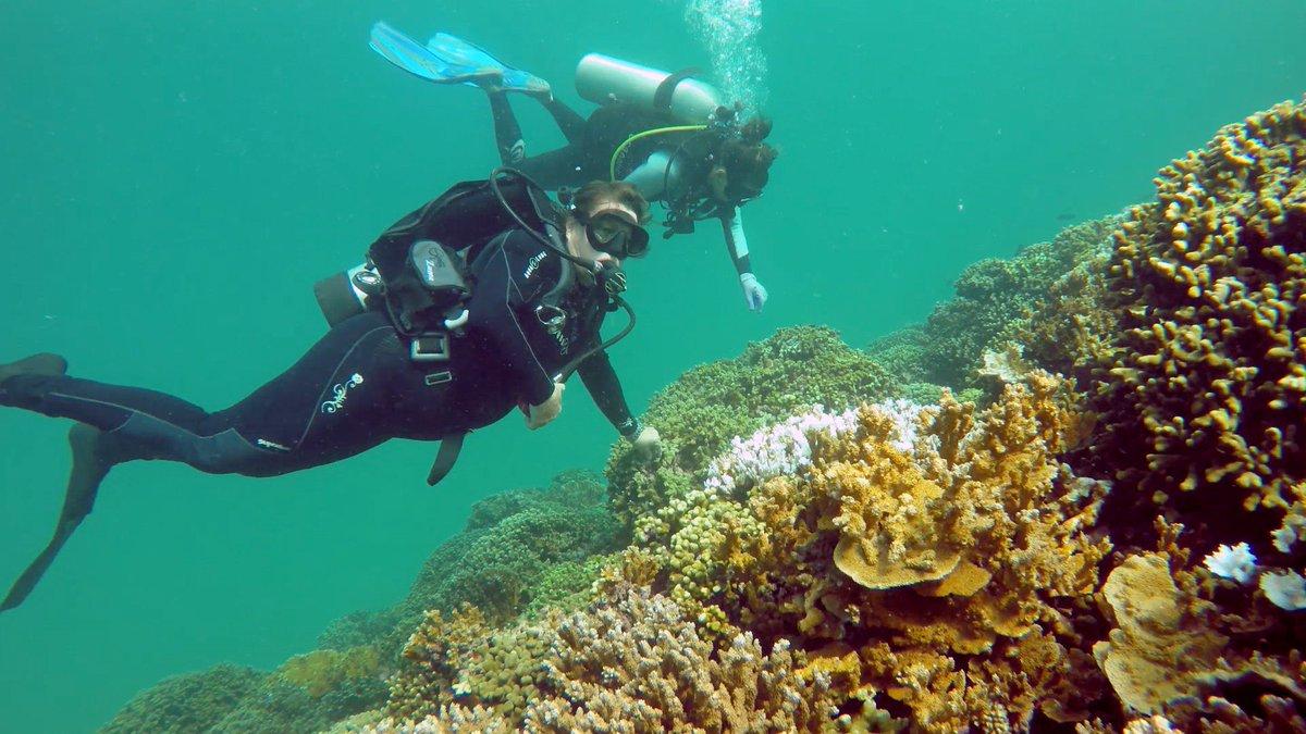 university of hawaii at manoa on twitter coralreef experts bridge