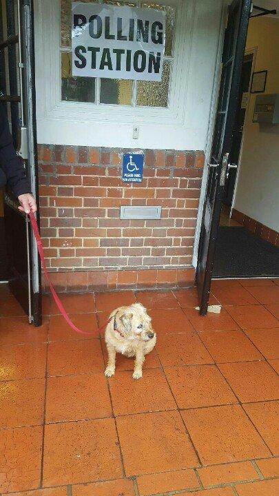 I bin to the polling station #DogsAtPollingStations https://t.co/vcIEqSkJOh