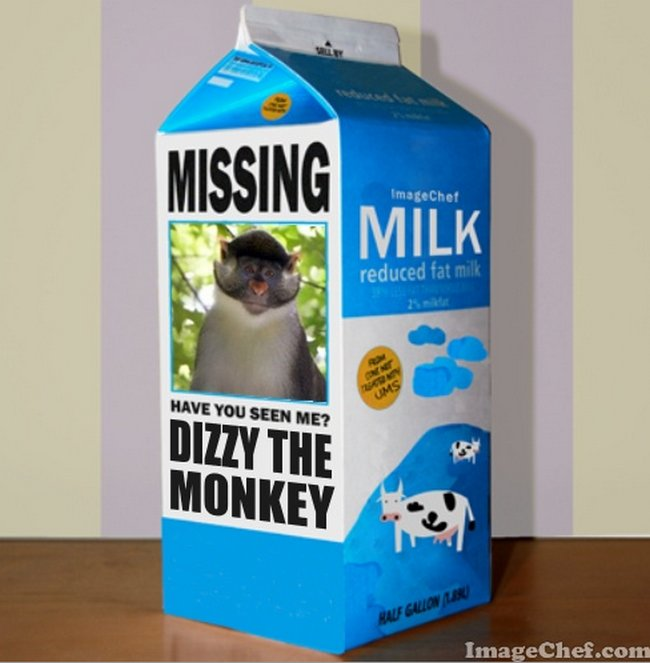 Dizzy the monkey is still missing.  Only now he's really missing. #springfieldma The search continues https://t.co/ui0QwVxH80