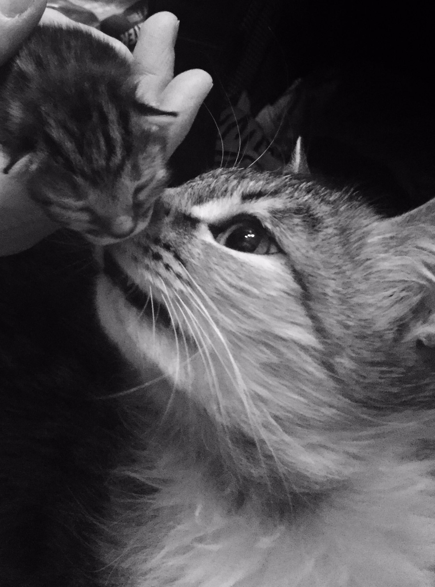 RT @KittensCam: Esme and #Prince a few minutes after his birth, and again at 6 weeks old https://t.co/1l5WK4NE9V