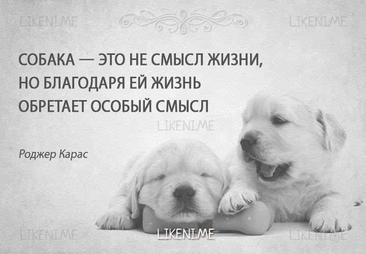 бля картинки цитаты про собак все зависит того