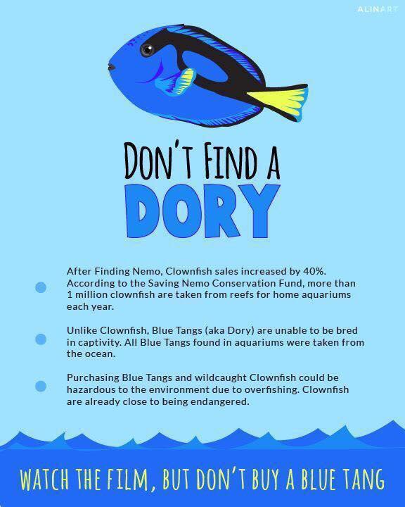 dory blue tang