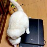 肉球たまらんw猫をスキャンした画像が可愛すぎる!