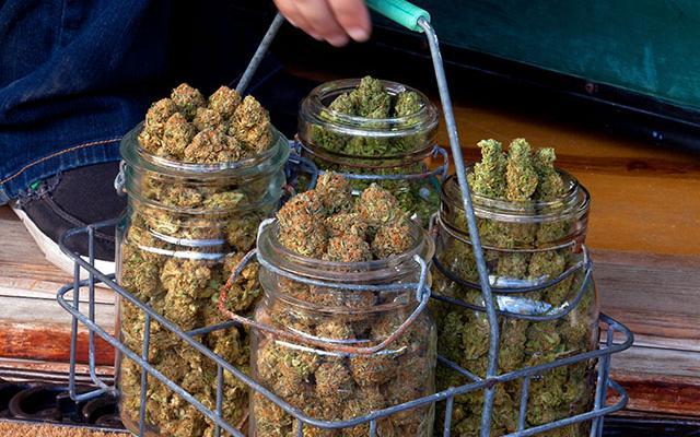 Radical Rant: 10 States Voting on Marijuana Reform