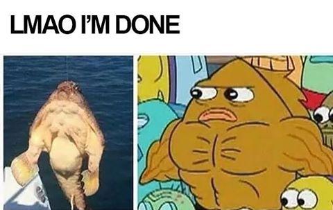 Clz77i9VEAAYvKt dank spongebob memes (@imsohonesttho) twitter