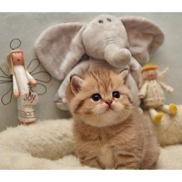 cute kittens socutekittens twitter