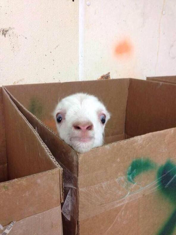When you're home alone taking a shower and you hear a noise