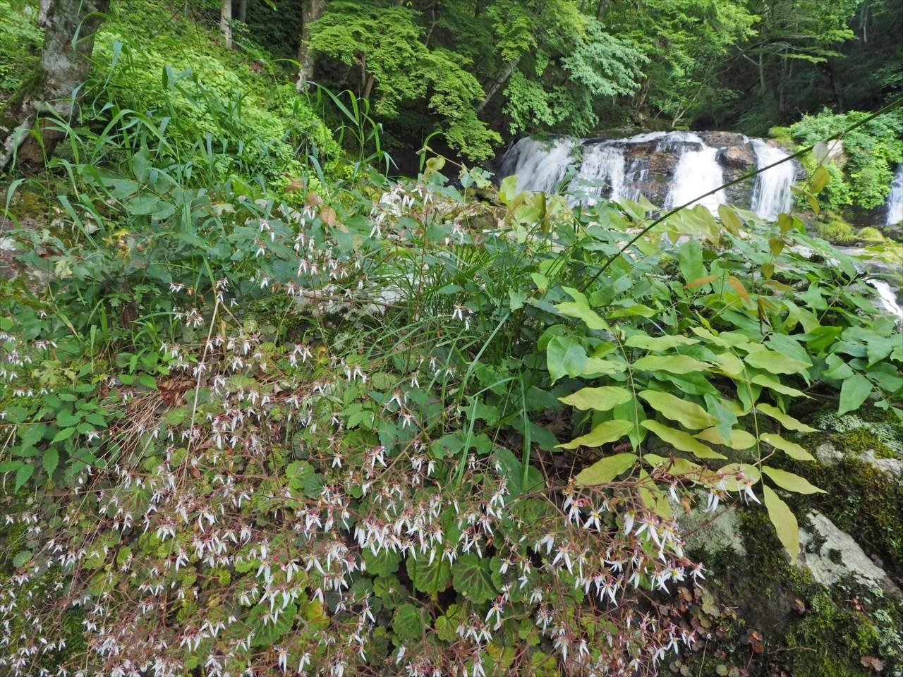 梅雨時の江竜田の滝