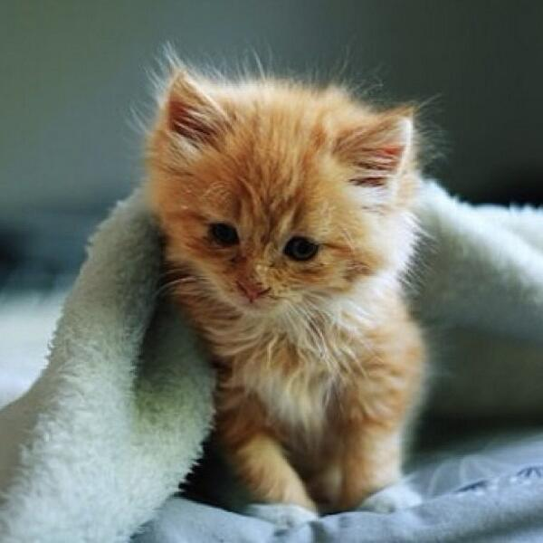 Cutest Cats At Fullcathouse Twitter