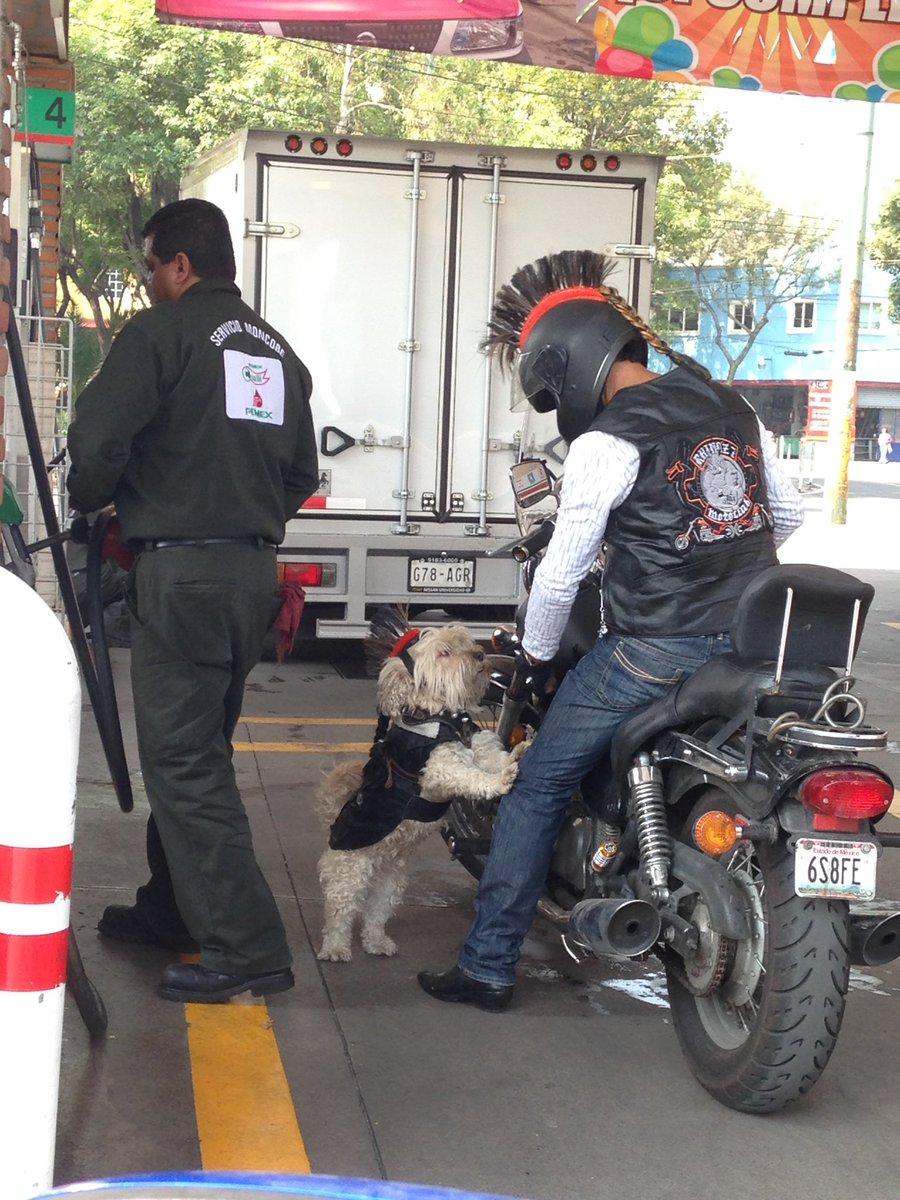 Cuando eres un campeón en la vida y subes a tu perro en tu moto con su chaleco y su casco Mohawk. https://t.co/iqJlNX2arz
