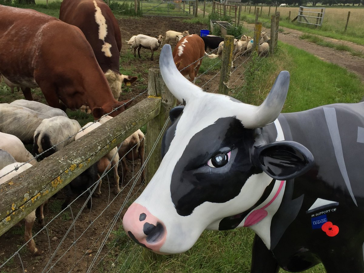 Thank you @BockettsFarm for letting me watch over Alfie and complete my second #Mooi5 mission! @CowParadeSurrey https://t.co/JVZIkZBv9D
