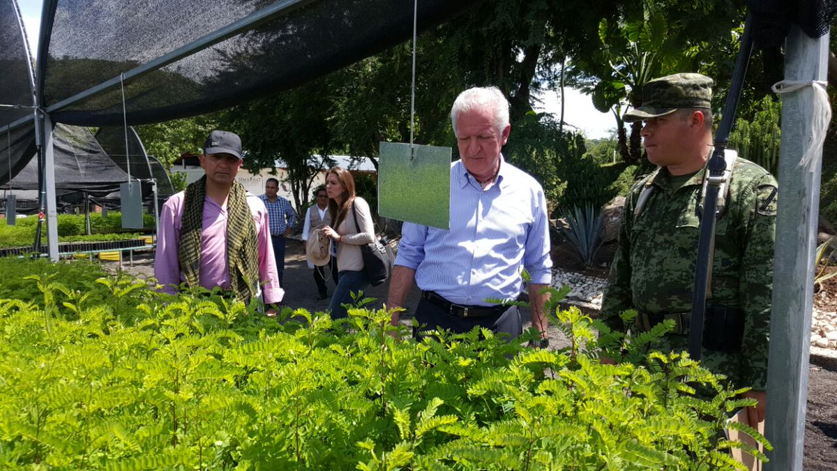Conafor on twitter el vivero forestal militar de for Viveros forestales conafor