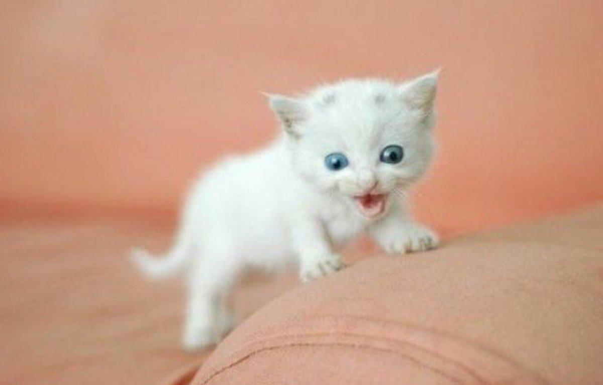 kickass kitten tinykitty