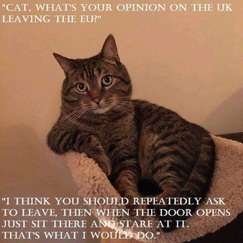 Cat, what's your opinion on the UK leaving the EU? https://t.co/R6oVfcmm2C
