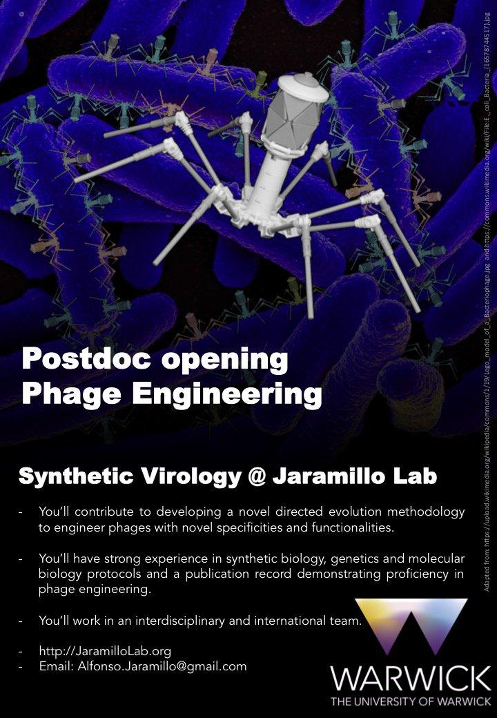 Synthetic phage postdoc