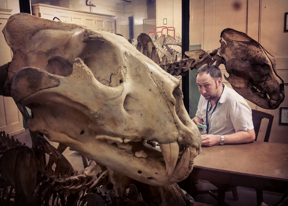 A museum curator in action. @janfreedman checking out Saiga skulls in the @NHM_London stores https://t.co/QegQm8zuBf