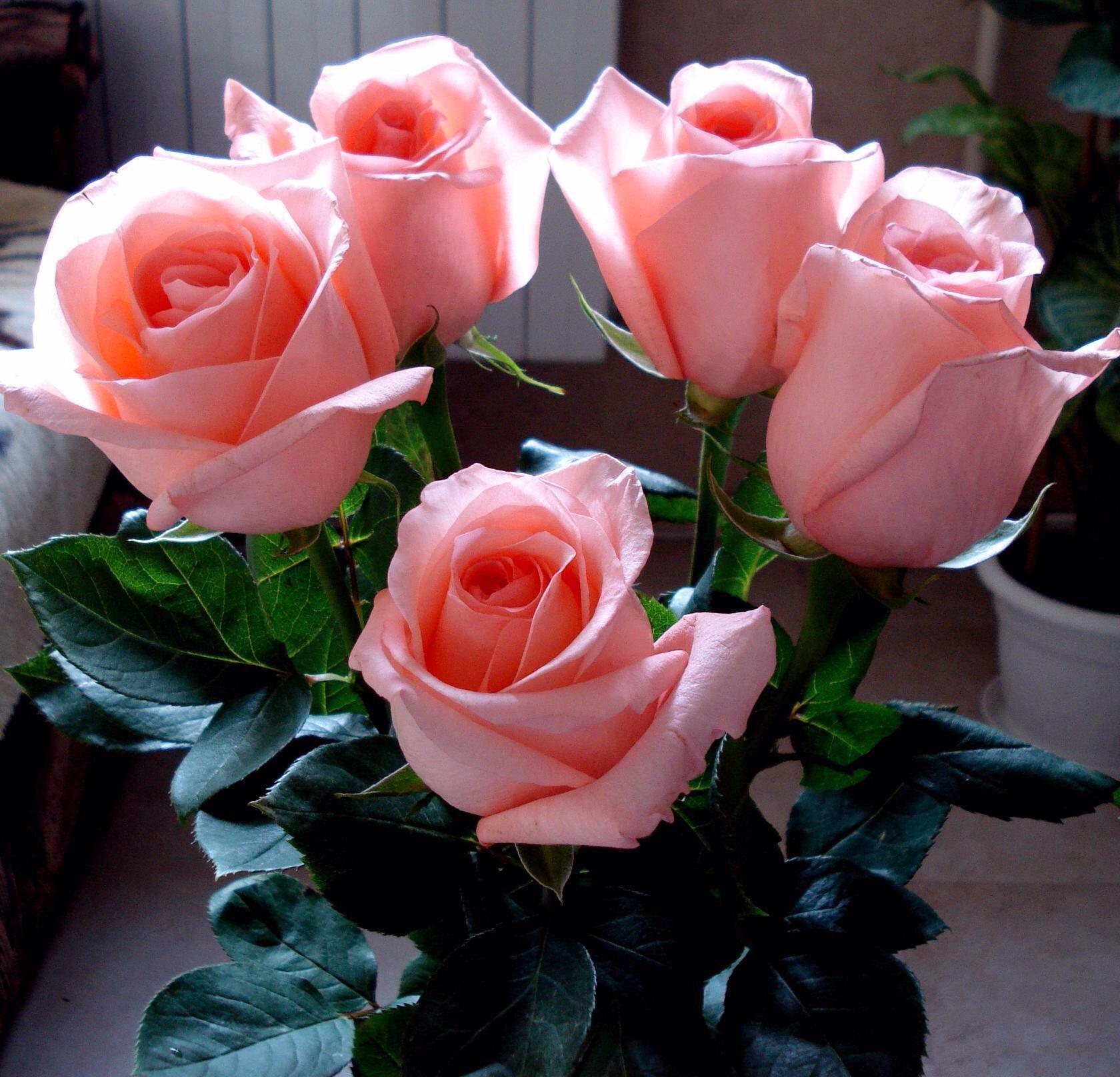 Картинки цветы для любимой женщины