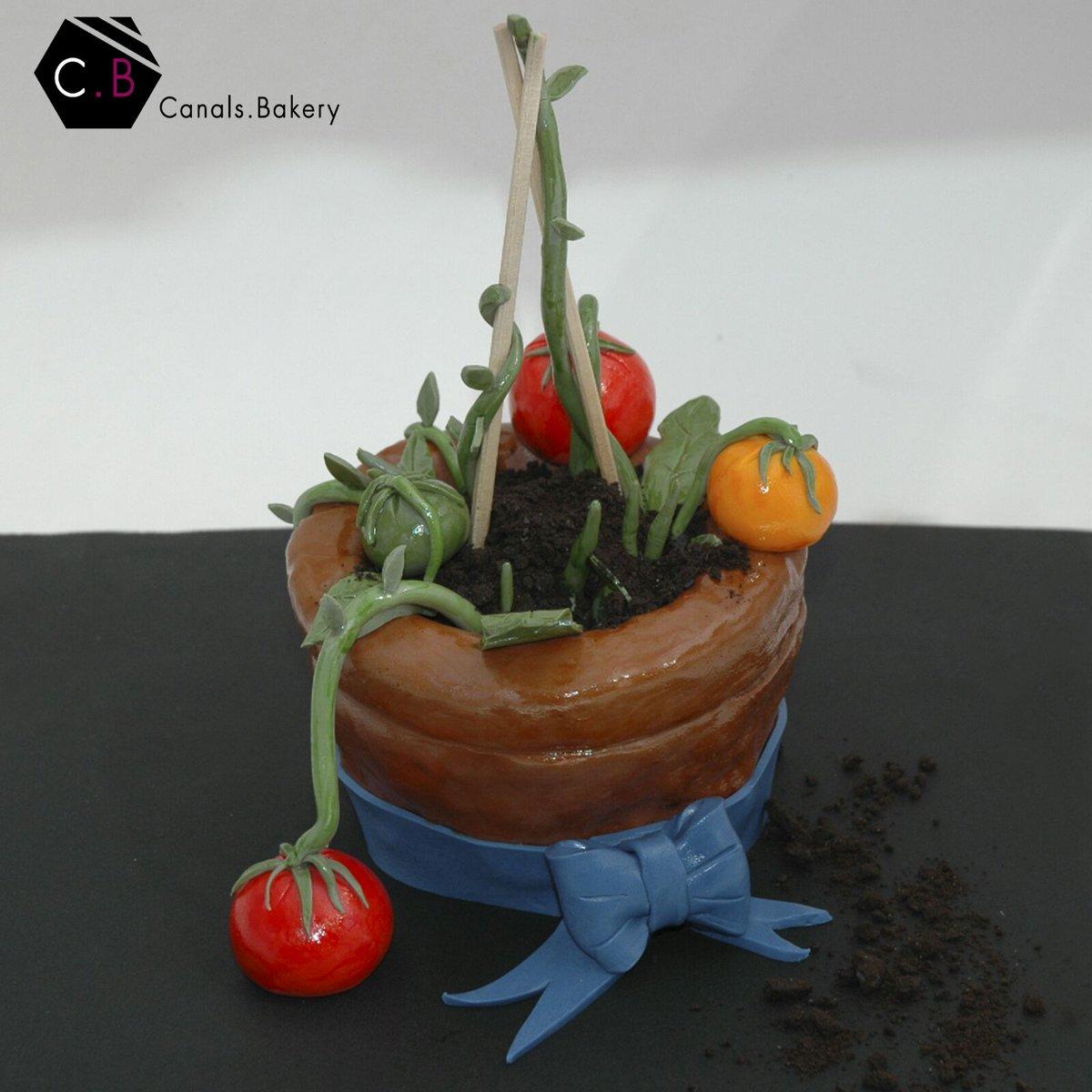 Canalskery On Twitter Tomato Plant Cake Gotmelike