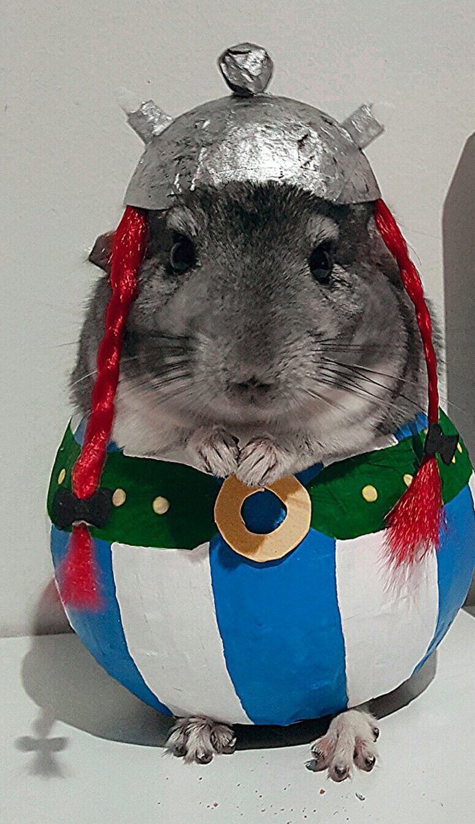 Cheer up everyone. Here's a chinchilla dressed as Obélix. https://t.co/6BKbXJhV3g