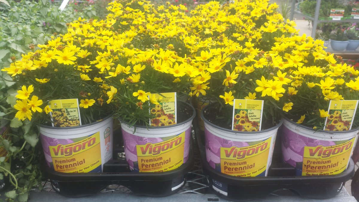 Garden State Growers On Twitter Vigoro Perennials Great Choices