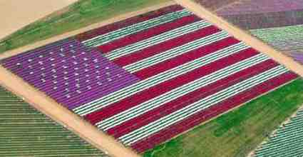 Have a safe, colorful and happy holiday weekend! Happy 4th of July and let freedom ring! #landscapechat https://t.co/ijS5hvQyYh