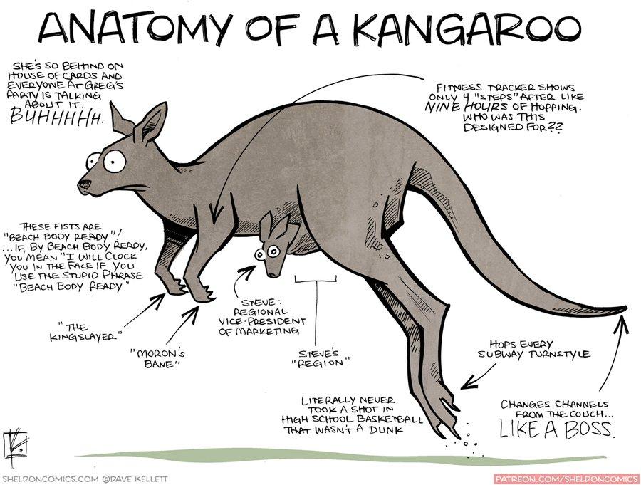 Dave Kellett On Twitter Anatomy Of A Kangaroo Httpst