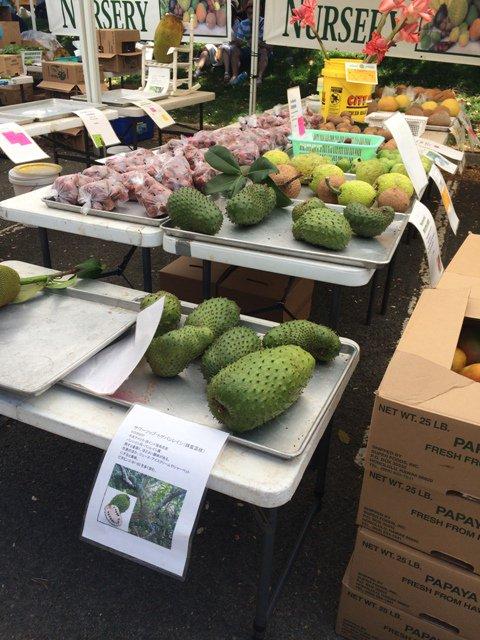 What To Do In Hawaii - KCC Farmer's Market #travel #hawaii #oahu https://t.co/nSX9DcMlhn https://t.co/DAidRsOI4t