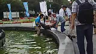 イイネ! @yoshiaki_0126:青山さん噴水に入って人命救助@尼崎  #voice1242 #青山繁晴 https://t.co/iHRoojTfdN