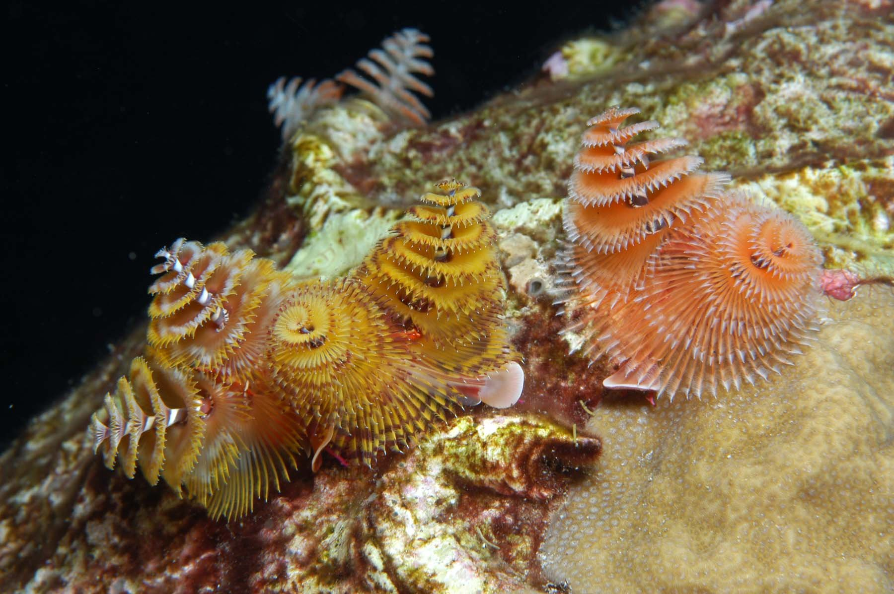 A GREAT essay on polychaetes fr @OceanPortal @SmithsonianMag for #InternationalPolychaeteDay https://t.co/7lBS16oh0g https://t.co/8xCJPwhFNh