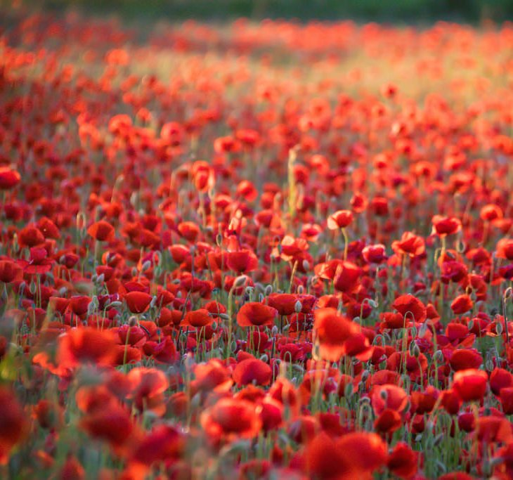 We will remember them #Somme100 https://t.co/C3wLYCK3W9