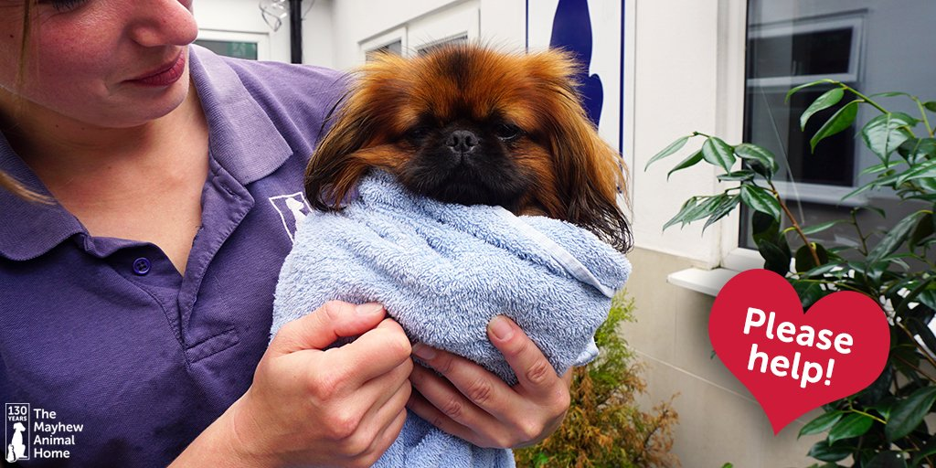 We are in desperate need of old towels for our #dogs & kennel cleaning - please can you help? #charity https://t.co/SVXHMP3zde