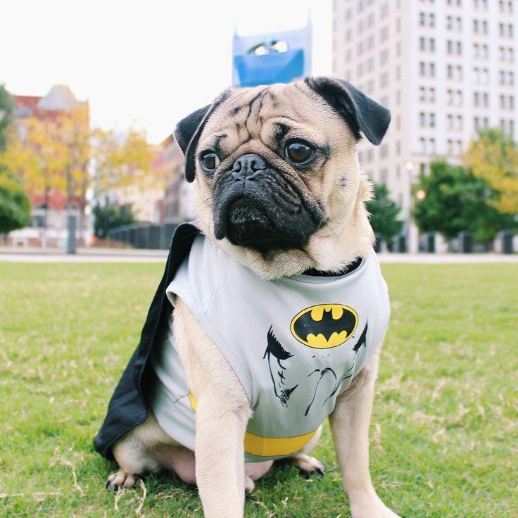 BatmanIntriga Deliveryenmtvhits Bat Animal Pug Vestido 0vNnwOm8