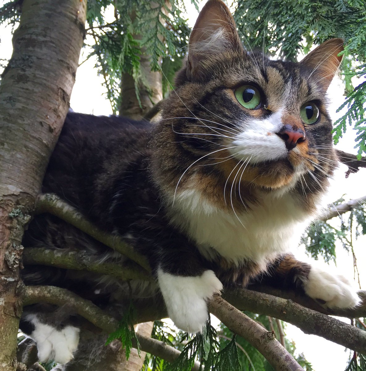 canopy cat rescue canopycatrescue twitter