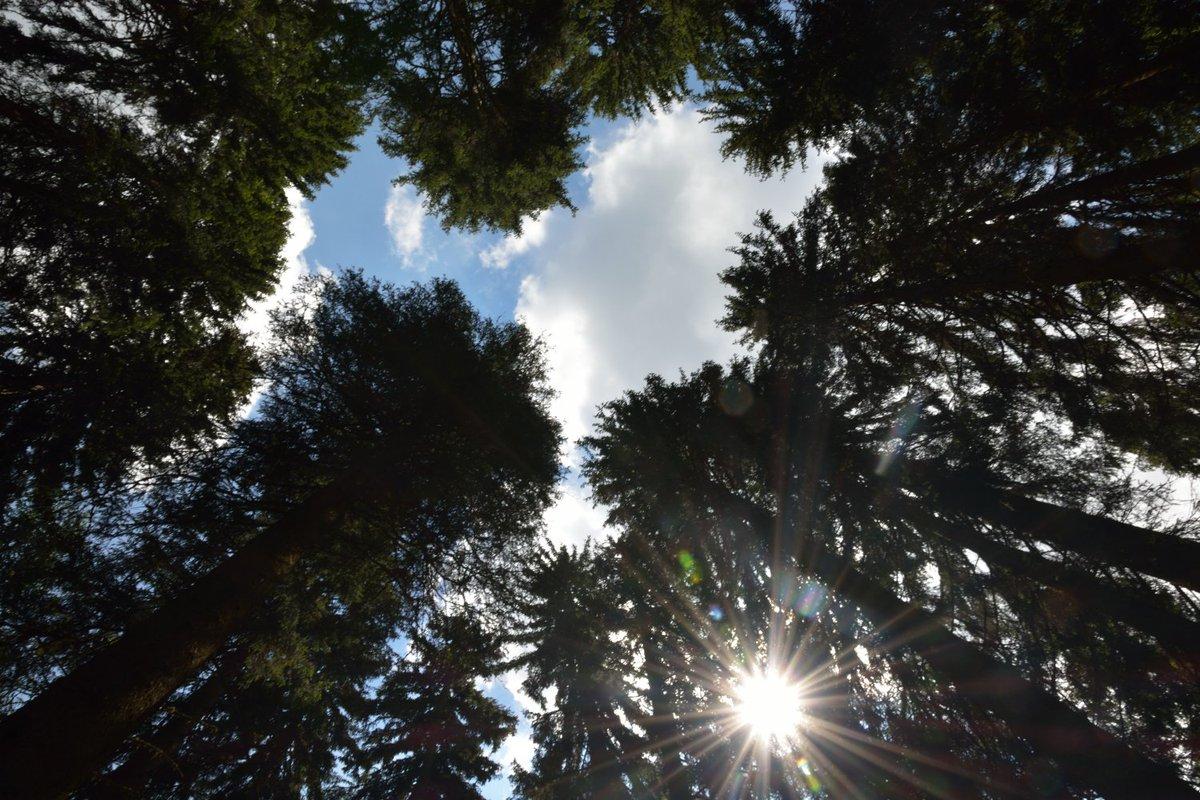 USA: In Colorado morti 834 milioni di alberi a causa di alcuni coleotteri