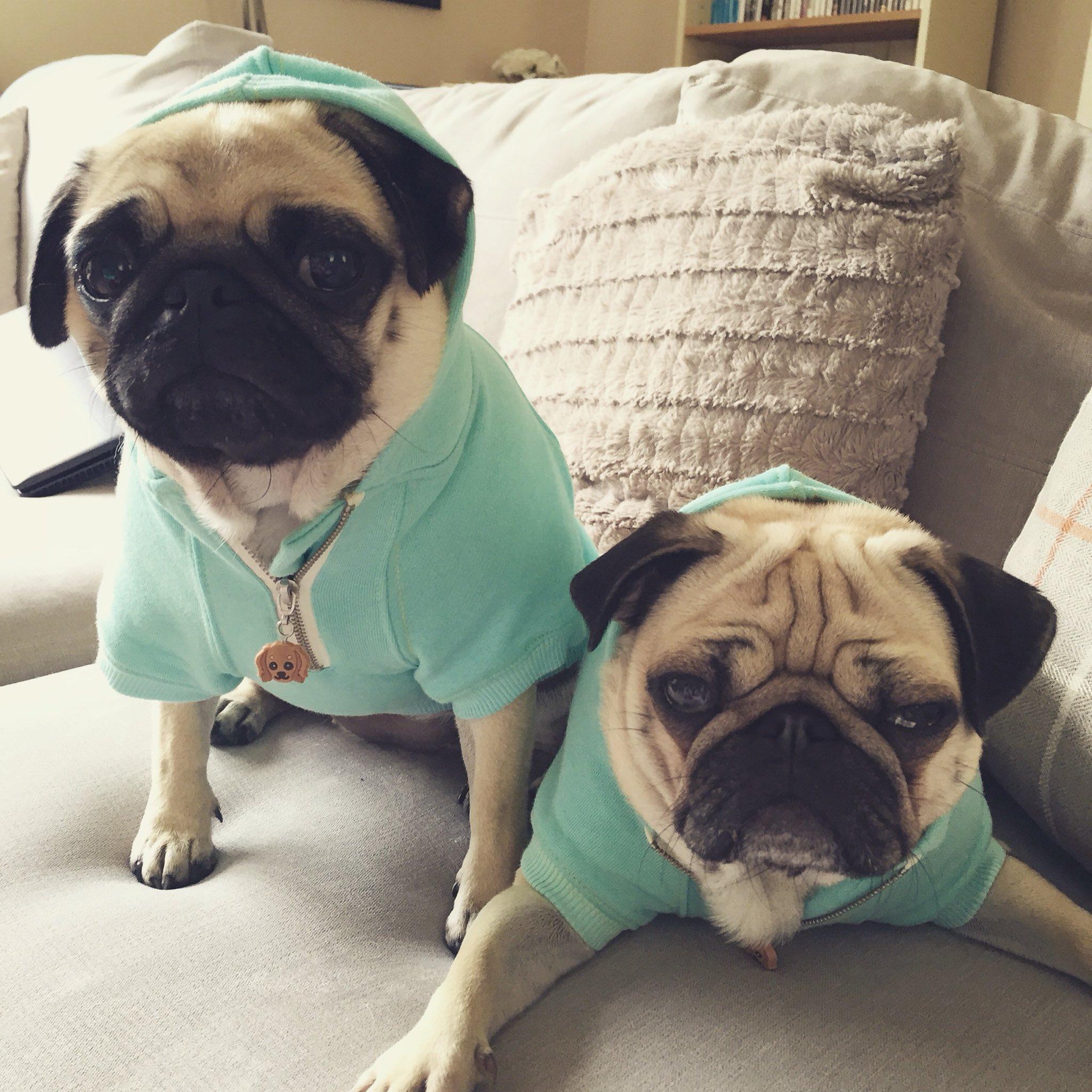 Pug hoodies