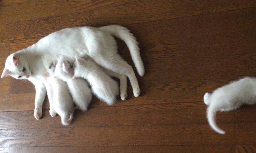 実家の猫の写真GET。定員オーバー。 pic.twitter.com/chTx5miHmN