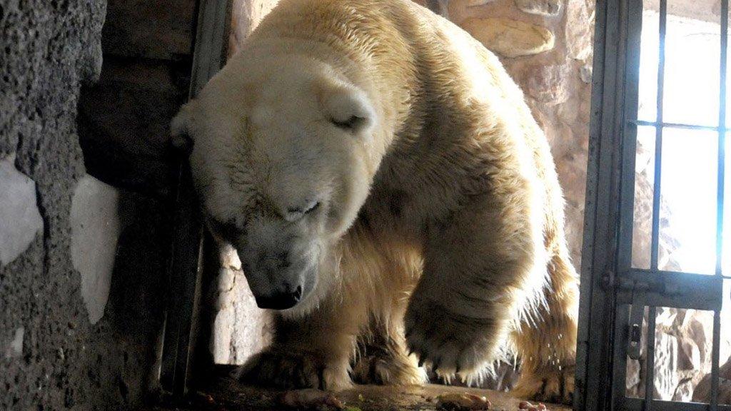 Argentina: È morto Arturo, l'ultimo Orso Polare