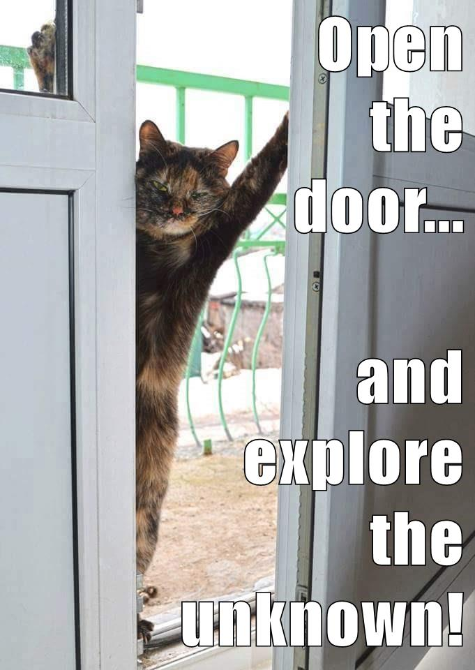 And here is today's #growthmindset cat: Open the door... and explore the unknown! More cats: https://t.co/G22ZOs93uR https://t.co/woQ30KRlmP