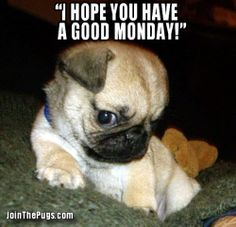 Image result for monday funny memes