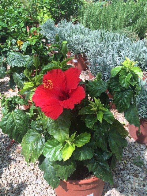 Gardeniers On Twitter En El Centro De Jardinería Tenemos