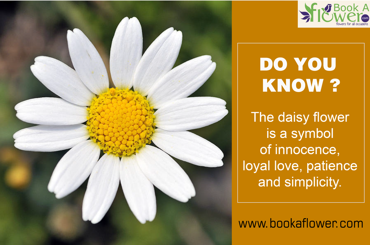 Book A Flower On Twitter Doyouknow Daisy Means Days Eye