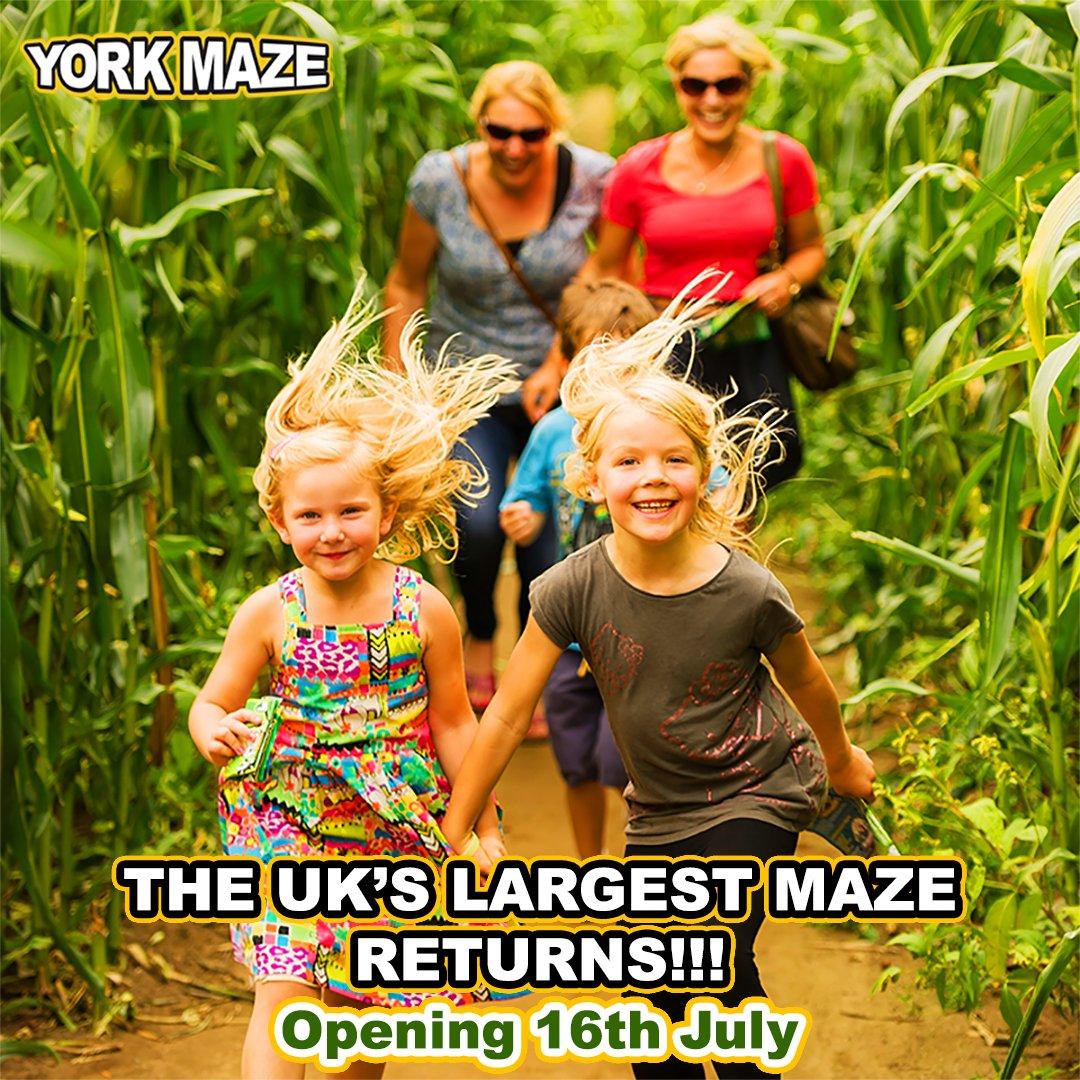 York Maze 2016