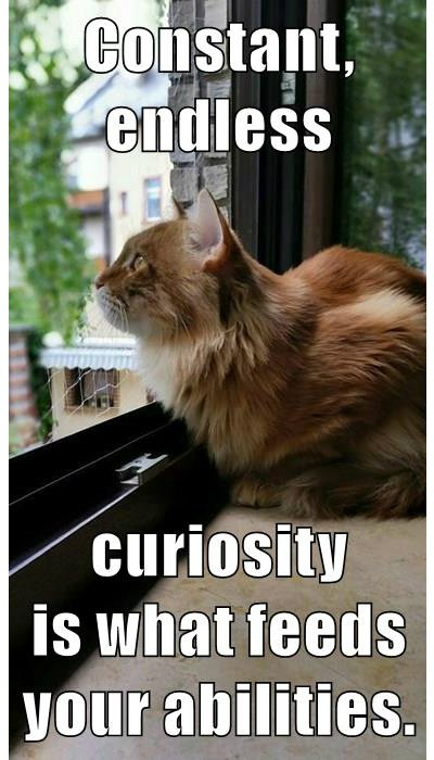 Today's #growthmindset cat knows the power of curiosity: it is what feeds your abilities! https://t.co/C7JPNRa6Fc https://t.co/FnfhWHVuS4