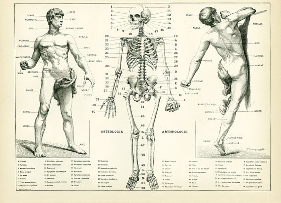 Sofrenchvintage On Twitter 1897 Anatomy Human Body Parts