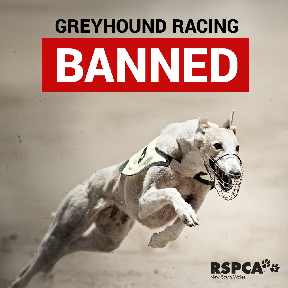 RSPCA NSW is ecstatic to announce that Greyhound Racing will be BANNED in NSW. https://t.co/s6LMNr4pnK