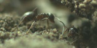 Voyage à l'intérieur d'une fourmilière https://t.co/IIiJ9AEkaT #zoologie #fourmilière #fourmis