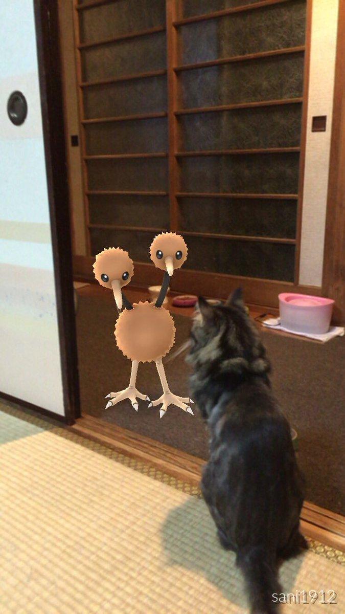 ポケモンgo!意味わかると怖い話・画像 (@iga4s) | twitter